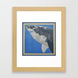 Fool Like You For Breakfast- Great White Shark Framed Art Print