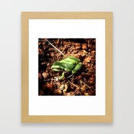 Arizona Tree Frog Framed Art Print