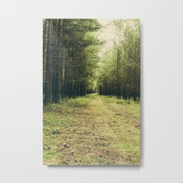 Forest Path... Metal Print