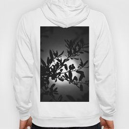Moon Shadows Hoody