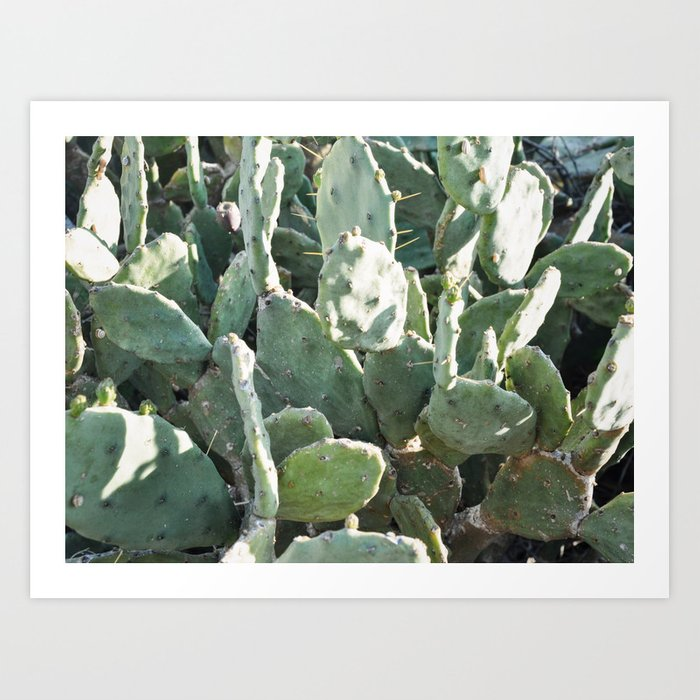 Kaktus #2/ color Art Print