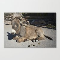donkey Canvas Prints featuring Donkey  by Rob Hawkins Photography