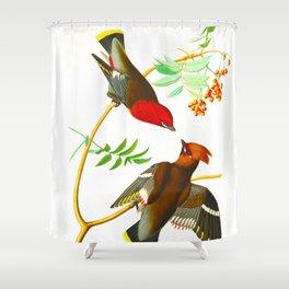 Bohemian Chatterer Bird Shower Curtain