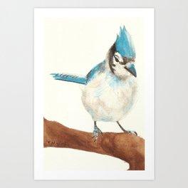 Winter Birds- Blue Jay Art Print