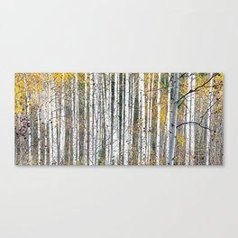 Aspensary forests Canvas Print