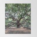 Oak of the Angels by reneesullivanphotography