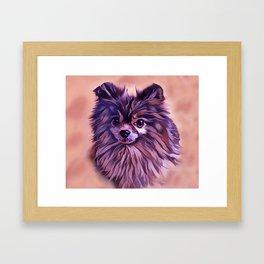 The Brindle Pomeranian Framed Art Print
