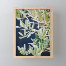 Photo of a Mediterranean Olive Tree II, in Trastevere Rome, Italy | Fine Art Travel Photography |  Framed Mini Art Print