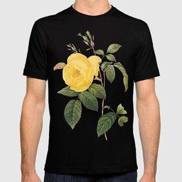 Botanical Print, Yellow Roses, Rosa Sulfurea T-shirt