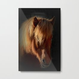 Horse in the dark Metal Print