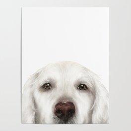 Golden Retriever WhiteDog illustration original painting print Poster