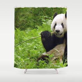 Exotic Super Dainty Grown Panda Bear Chewing On Bamboo Twig In Jungle Close Up Ultra High Res Shower Curtain