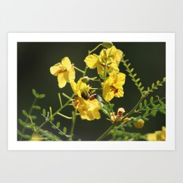 Macro of Bee Pollinating a Palo Brea Blossom Art Print