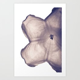 Angels Trumpet Art Print