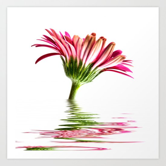 Pink Gerbera Flood 2 Art Print