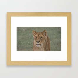 The English Lioness Framed Art Print