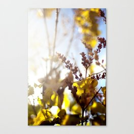 Mellow Canvas Print