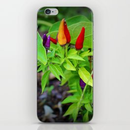 Colorful Peppers iPhone Skin