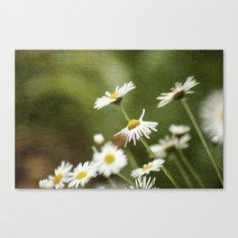 Daisy Chain 3 Canvas Print