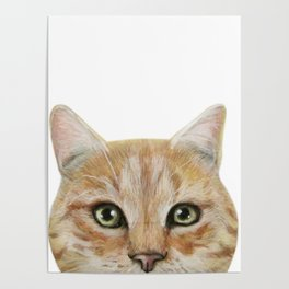 Golden British shorthair, America shorthair, cat, acrylic illustration by miart Poster