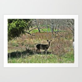 Deer in Canaan Valley PhotoArt Art Print