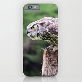 Ready to Fly: Great Horned Owl iPhone Case