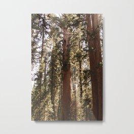 Sequoia National Park XIV Metal Print