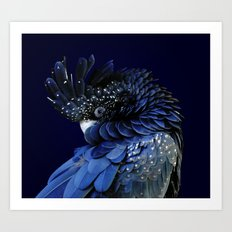 Australian Red-Tailed Black Cockatoo in Blue Art Print