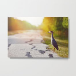 Night Heron Waiting for His Ride Metal Print