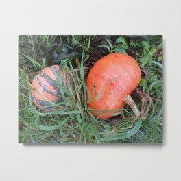 Harvest season Metal Print