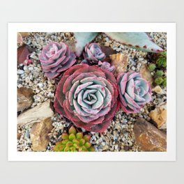 Red, Green and Lavender Succulents Art Print