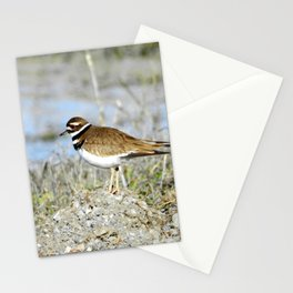 Journey of a Killdeer Stationery Cards