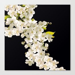 Cherry Flowers On Black Background #decor #society6 #buyart Canvas Print