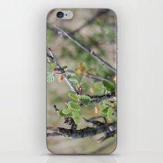 Little Leaves iPhone & iPod Skin