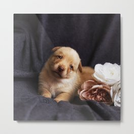 Australian kelpie puppy with rose Metal Print