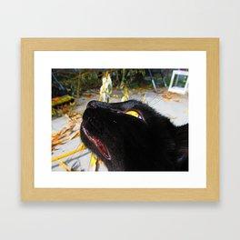 Bebe Kitty Framed Art Print