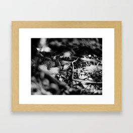FALLEN SILVER - Fomapan Creative 200 (4x5 film) Framed Art Print