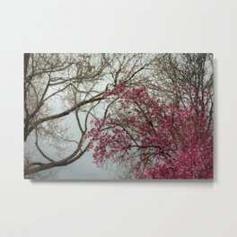 Pink Spring Window Metal Print