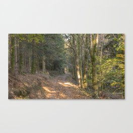 French forest road Canvas Print