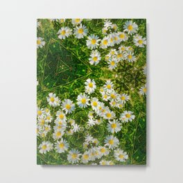 Message In The Daisies Metal Print