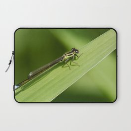 bugging around Laptop Sleeve