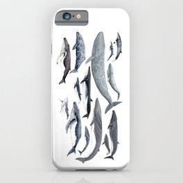 Whale diversity iPhone Case