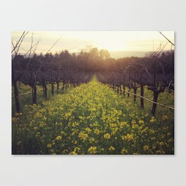 Vineyard Sunset Canvas Print