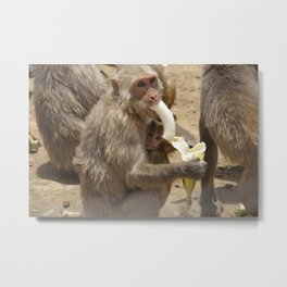 Breakfast for Monkeys  Metal Print