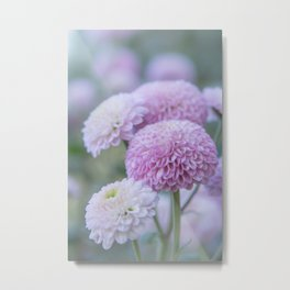 Light Pink Chrysanthemum Flowers Metal Print