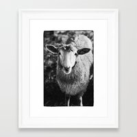sheep Framed Art Prints featuring Sheep by SilverSatellite