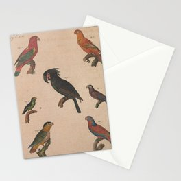 Chattering Lory Red Lory psittacus tui psittacus gigas Black Parrot Black headed Parrot psittacus coccineus13 Stationery Cards