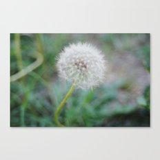 Lone Dandelion Canvas Print
