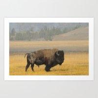 Buffalo at Yellowstone #1 Art Print