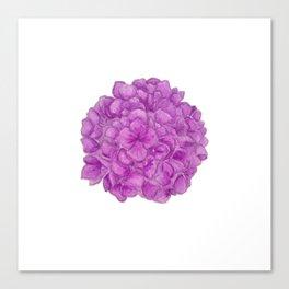 Alix's Hydrangeas Canvas Print